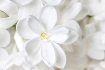 Photo sur Aluminium Lilac White lilac flowers wallpaper, floral motif background