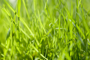 Background of green grass on a summer day