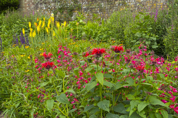 Colouful summer garden border