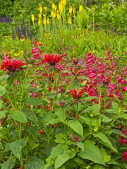 Colouful summer garden border