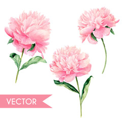 Vector watercolor hand painted pink peony illustration set