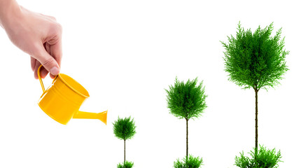 Male hand watering tree with yellow watering can, isolated on white. The process of growing a tree from small to large. Human care about nature and plants. Three trees in different stages of growth