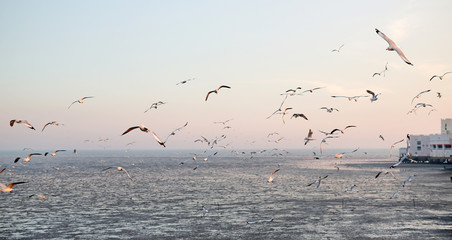 Landscape image of Seagulls flying in the sky at sunset.