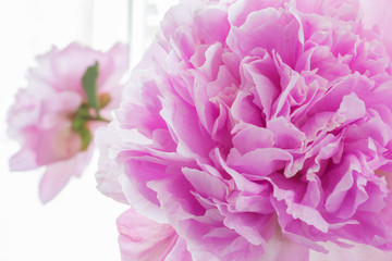 A photograph of a pink peony flower. Petals close-up as background