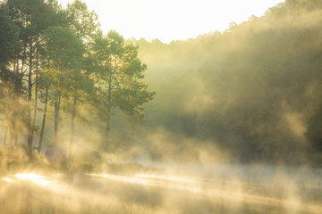 Morning sunrise at Pang-ung, Pine forest in Mae Hong Son,Thailand