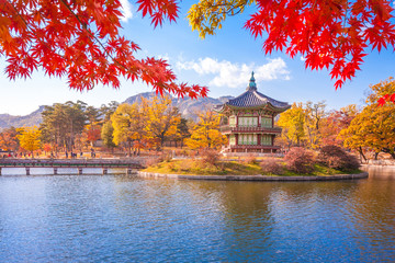 Stores photo Seoul Gyeongbokgung palace with Maple leaves, Seoul, South Korea.