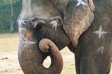 Słoń, Chitwan, Nepal