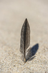 Feather on a beach with a shaddow, summer time.