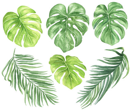 Watercolor palm leaves set, hand drawn colorful tropical botanical  illustration isolated on white background