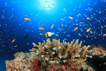 Fish on ocean coral reef