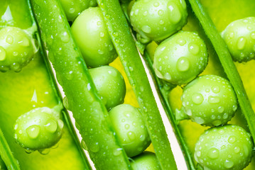 Fresh peas pods macro.Green vegetable food background.