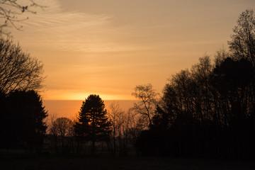 Sunset forest orange sky