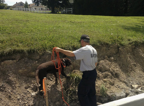 Cadaver dog searches for more human bones at road construction site in Schuylkill Haven, Pennsylvania
