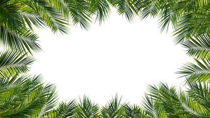 rahmen aus palmblättern, palmwedel, palme auf weißem hintergrund