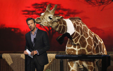 "Sudeikis speaks next to baby giraffe at Spike TV's ""Guys Choice"" awards in Culver City"