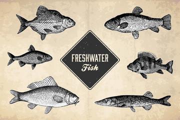 Freshwater Fish - Vintage Illustrations