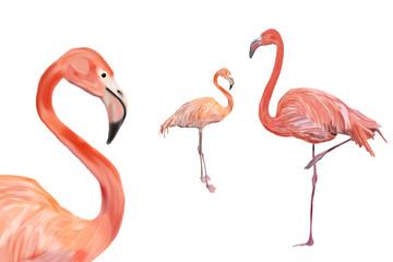 Drei Flamingos freigestellt vor weißem Hintergrund, verschiedene Entfernungen