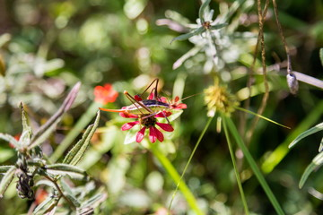 Katydids are found in Mexico. Similar to grasshoppers, you can find them in grasslands, prairies, meadows and other grassy or weedy areas, especially near swamps, creeks, and other damp area in Mexico