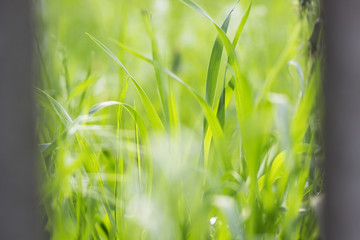 bright and juicy summer green grass