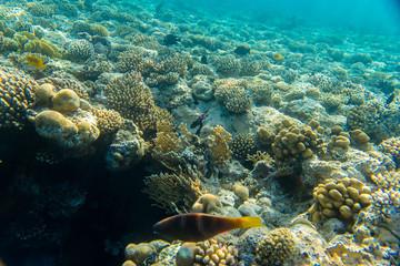 Fotobehang Koraalriffen beautiful coral reef under water