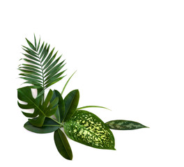 Bouquet of tropical leaves (Monstera, Dieffenbachia, branch palm, Ficus benjamina) on a white background with space for text. Top view, flat lay