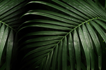 Acrylic Prints Palm tree palm leaf for texture or background