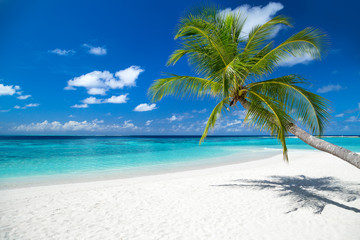 Fond de hotte en verre imprimé Tropical plage coco palm on tropical paradise island dream beach