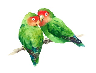 Watercolor Birds Lovebirds On The Branch Valentine's Day Illustration Love Hand Drawn isolated on white background