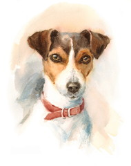 Watercolor Dog Jack Russell Terrier Portrait - Hand Painted Animals Pets Illustration isolated on white background