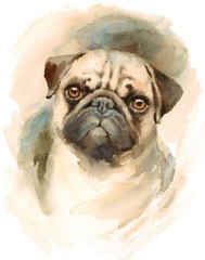 Watercolor Dog Pug Portrait - Hand Painted Illustration of Pets