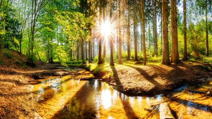 Fototapete - Sonnenuntergang in einem Wald mit Bach