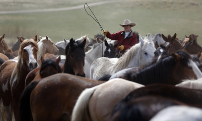 Renee Mantle sorts a herd of horses in a corral during Montana Horses' annual horse drive outside Three Forks