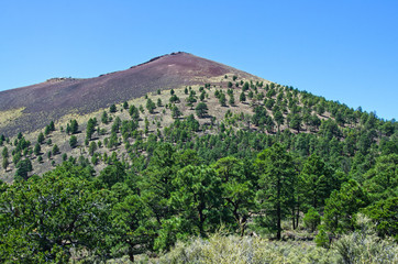 Pine Trees Grow in Lava at Sunset Crater Volcano National Monument