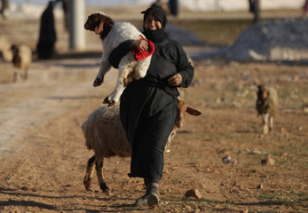 A woman, who fled with others the violence from Islamic State-controlled northern Syrian town of al-Bab, arrives with her herd of sheep in the rebel-held outskirts of the town