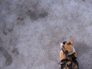 3 Colored Kitten crouching