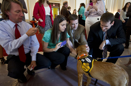 """Congressional aides pet a dog named 'Beetlejuice', a rescue animal, during an animal adoption event """"Paws for Celebration"""" on Capitol Hill in Washington"""