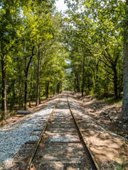 train tracks with trees