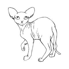 vector contour sketch f sphinx cat animal