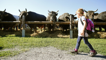 A girl walks past bulls offered at the traditional Stierenmarkt domestic cattle market in the Swiss town of Zug