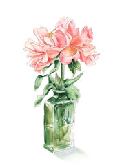 Pink, salmon color peony in green glass bottle, hand drawn watercolor sketch, botanical illustration isolated on white background. Sketch style watercolor illustration of pink peony flower in vase