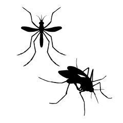 Silhouette of mosquito. Vector illustration.