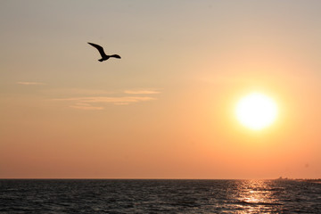 Fond de hotte en verre imprimé Dauphins Seagull flying over the sea on the background of sunset