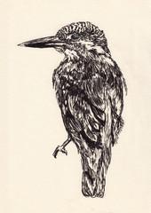 bird sketch hand drawn illustration