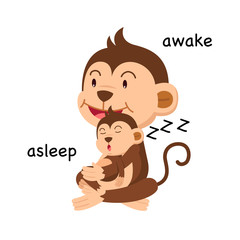 Opposite words asleep and awake vector