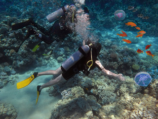 Divers swims through tropical fish on coral reef