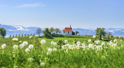 Fototapete - frischer Frühlingstag am Alpenrand