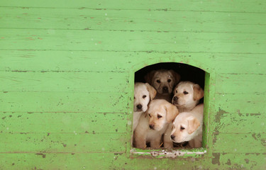 Puppies sit in kennel at a frontier guards' cynology centre near the town of Smorgon
