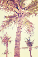 Vintage stylized picture of a palm trees, selective focus.