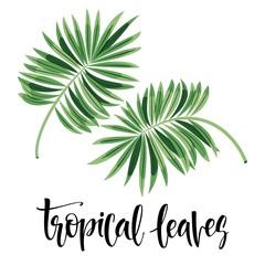 Vector tropical leaves, jungle leaves