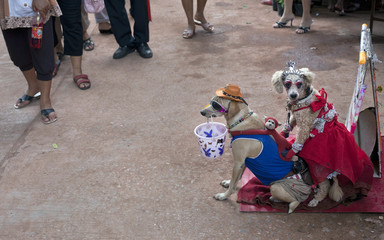 Thai canines pose for donations during the the Ghost festival in Thailand's north east Loei province